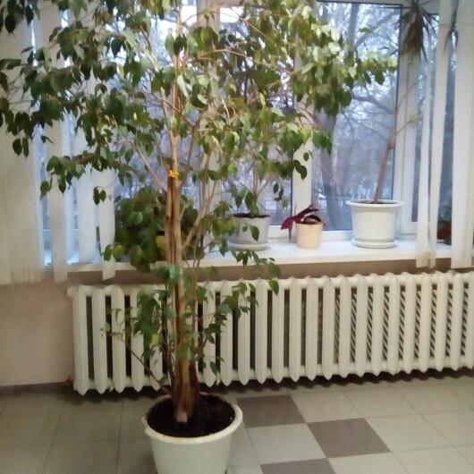 Городская больница №8 на Нагорной (ранее ГБ №9), фото №3