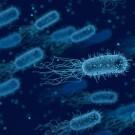 Самые опасные бактерии вокруг нас